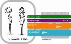 Zervixschleim Nach Einnistung - 2 schwangerschaftswoche 2 ssw empf 228 ngnis konzeption