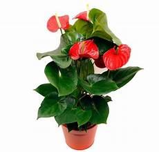 piante da appartamento con fiori bianchi piante da appartamento grasse verdi con fiori come