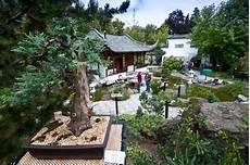 japan garten stuttgart bonsai ausstellung im chinesischen garten stuttgart