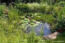 池塘中的藻類 04 除藻劑 沼澤缸之家