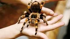 angst vor spinnen psychologie woher die angst vor spinnen kommt welt