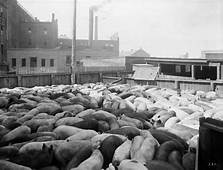 Meat Packing Industry  Wikipedia