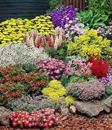 Pflanzen Günstig - gro 223 er staudengarten 14 pflanzen g 252 nstig kaufen