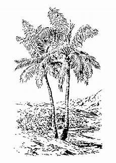 palma llanera para colorear disegno da colorare palma disegni da colorare e stare gratis