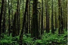 Sebutkan 5 Contoh Hasil Hutan Hutan Dunia Dan Hijau