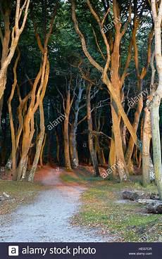 lichtstimmung am abend in der dar 195 ÿer urwald nationalpark