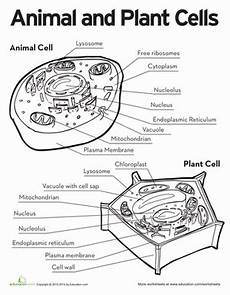 cells and their organelles coloring worksheet answer key jawar