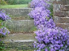 fleur vivace plein soleil il fait beau des vignes