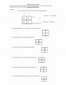 punnet square worksheet punnett square worksheet