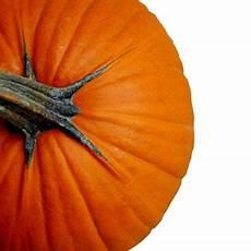 preserving your halloween pumpkin farmers almanac hints tips pumpkin pumpkin pancakes