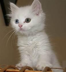 Gambar Kucing Kumpulan Gambar