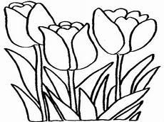 10 Gambar Bunga Tulip Cantik Dari Seluruh Dunia