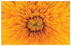 Yellow Flower Picture 30 types of yellow flowers ftd