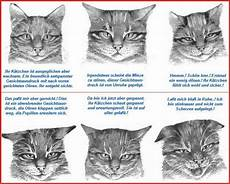 wie katzen kommunizieren csapokinga
