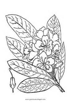 Virina Malvorlagen Riesen Rhododendron Gratis Malvorlage In Kr 228 Uter Natur