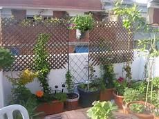 Welche Pflanzen Als Sichtschutz - balkon sichtschutz mit pflanzen natur pur auf dem balkon