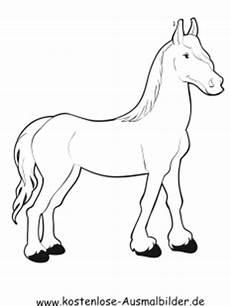 Ausmalbilder Pferde Haflinger Ausmalbilder Haflinger Pferd Tiere Zum Ausmalen