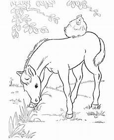 malvorlagen fur kinder ausmalbilder pferde mit fohlen