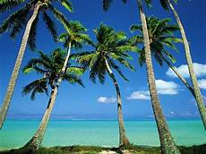 Hawaiian Tropical Palm Tree by Why Are Palm Trees Beautiful Aeshah Adlina S Weblog