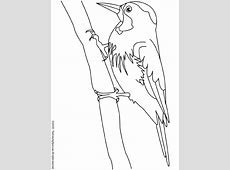 Pájaro carpintero #9 (Animales) ? Páginas para colorear