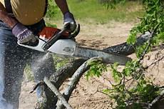 couper un arbre 12261 5 best professional chainsaw 2017 2018 reviews top on the market