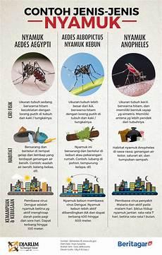 Pembeda Nyamuk Aedes Dengan Nyamuk