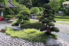 bonsai baum im zen garten gestaltungsideen im