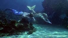 Malvorlagen Meerjungfrau Wattpad As A Mermaid Das Leben Einer Meerjungfrau 13