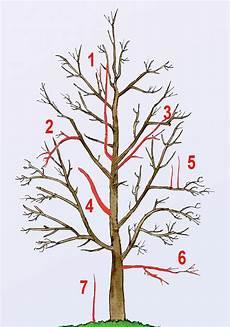 Obstbaumschnitt Selbst De
