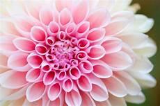 Flower Wallpaper Photo by Flower Wallpapers Hd Unsplash