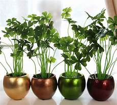 Pflanzen Zu Hause - top 3 lucky plants to uplift your home d 233 cor bring