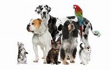 Pet Feed Supply