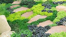 couvre sol sans entretien 6 ways to use groundcovers
