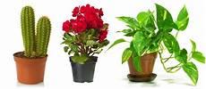 Plantes Depolluantes Pour Interieur Delicatesse Beaute