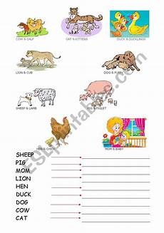 animal boogie worksheets 13809 worksheets animals and baby animals