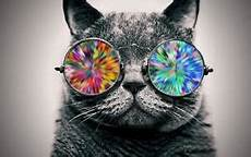 Cat Wearing Glasses Psychedelic Poster Print Picture