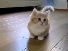 Legged Cats