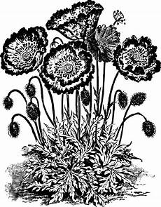 Free Flower Clipart Black And White