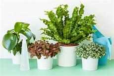 Gesunde Zimmerpflanzen Im Winter Tulln