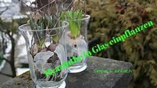 Glas Deko Selber Machen - diy hyazinthe schlicht einfach in glas eintopfen die