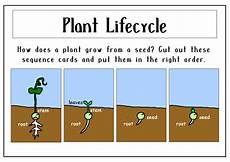 growing plants science teaching resources early years key stage 1 2 flowers trees science by