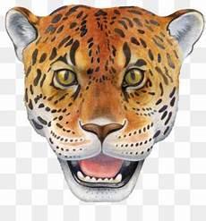 Jaguar Macan Tutul Harimau Gambar Png