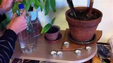 comment arroser ses plantes pendant les vacances vacances astuces pour arroser ses plantes pendant de
