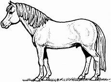 schoenes pferd 2 ausmalbild malvorlage tiere