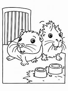 baby guinea pig coloring page color