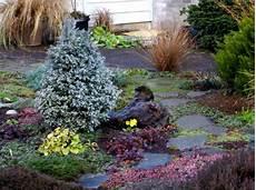 arbustes nains pour rocaille conif 232 res nains pour la rocaille esp 232 ces et vari 233 t 233 s