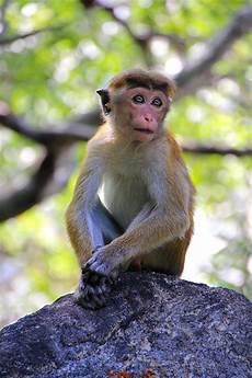 Gambar Monyet Sedih Lucu