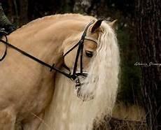 Schöne Pferde Bilder - die 2740 besten bilder sch 246 ne pferde in 2019 sch 246 ne