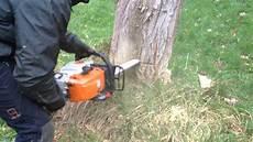 couper un arbre 12261 comment couper un arbre