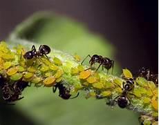 Ein Garten Voller Ameisen Wie K 246 Nnen Die Insekten Auf